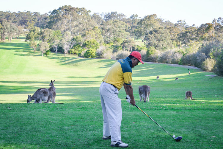 Full length of man by kangaroos playing golf