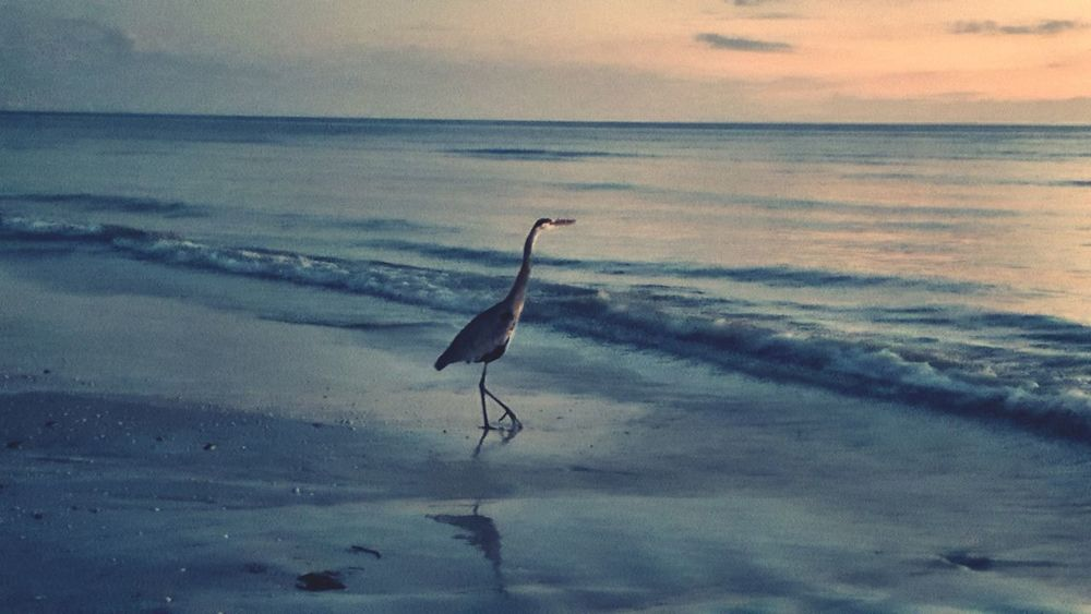 Beach Fort Myers Sunset Beauty In Nature Sand Birds