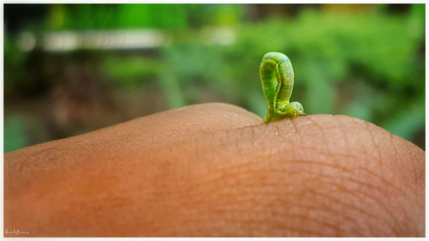 Focus On Foreground Auto Post Production Filter Close-up One Animal Green Color New Life Nature Human Finger Beauty In Nature Insect Nature_collection Nature Outdoors Day Beauty In Nature