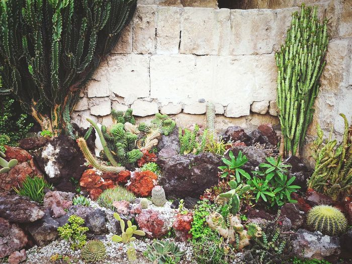 Plants growing by wall