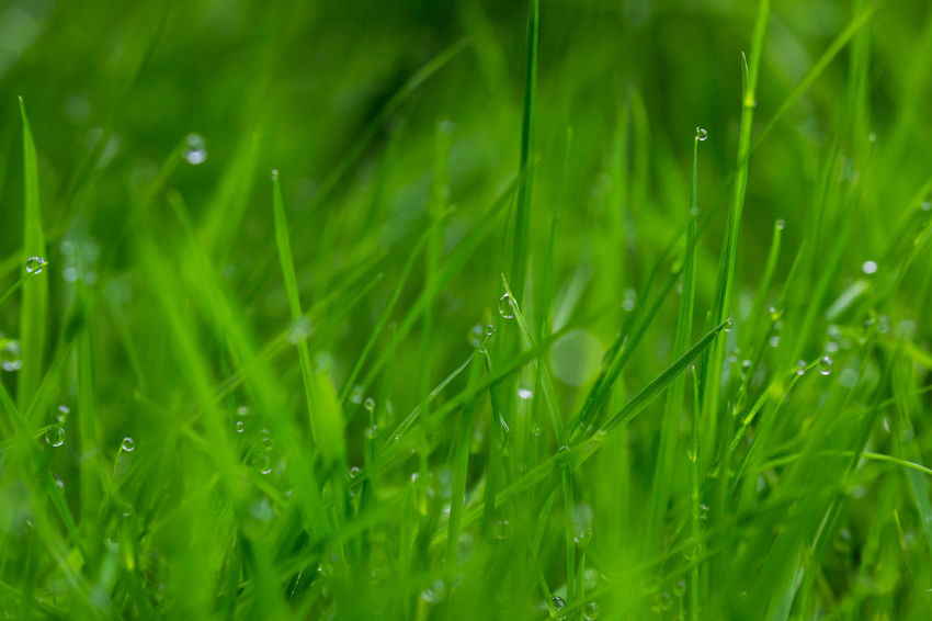 After Rain Backgrounds Beauty In Nature Day Drop Field Freshness Grass Green Color Growth Nature No People Wet Grass
