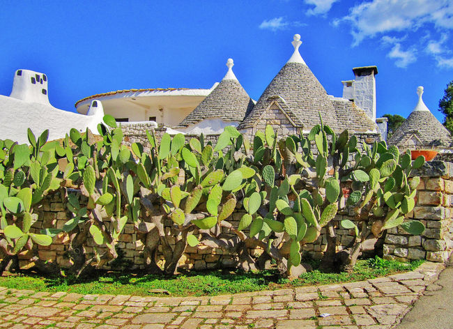 Prickly pears cactus with trulli in Puglia, Italy Ancient Cactus Mediterranean  Prickly Pear Cactus Puglia Architecture Blue Building Exterior Built Structure Day Italy Nature No People Old Houses Outdoors Prickly Pear Sky Stone Pavement Stone Wall Traditional Trulli Trullo Valle D'itria