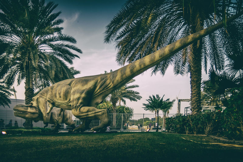 Fight Animal Themes Childhood Day Dinausaurs Dinausaurs Fighting Field Full Length Grass Growth Mammal Nature One Animal Outdoors Palm Tree Real People Sky Tree Tree Trunk Trex Fighting Trex Fih