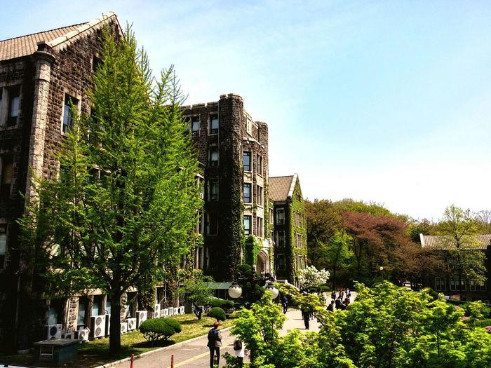 YonSei University Spring Yonsei Seoul, Korea Shinchon