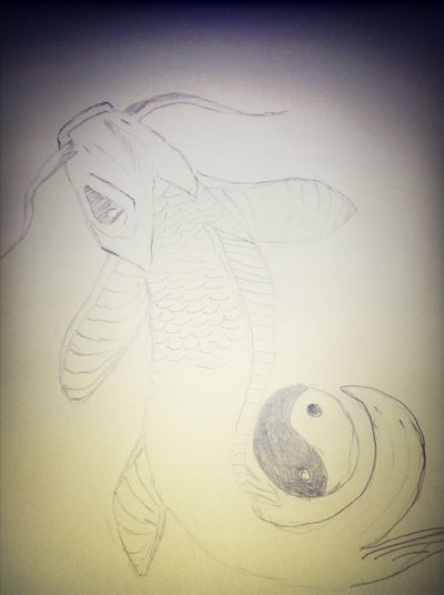 In The Making Of Koi Fish Drawing
