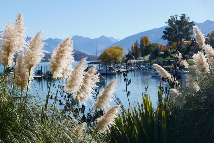 Wanaka Blue Water Plant Sky Nature Mountain Lake No People Tree Beauty In Nature Clear Sky Day Growth Tranquility Tranquil Scene Scenics - Nature Non-urban Scene Grass Outdoors