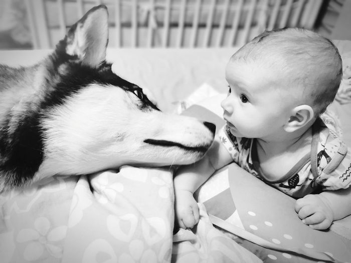 Close relation of dog and baby