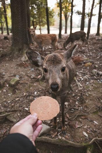 Human hand holding deer