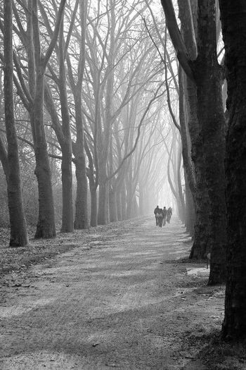Tree Nature Beauty In Nature Tranquility Tree Trunk Outdoors Day Forest Scenics Growth Landscape Bare Tree Winter Fog Branch No People Sky Cold Temperature