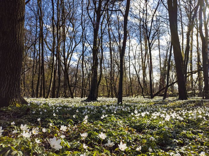 Scenic view of flowering trees on field in forest