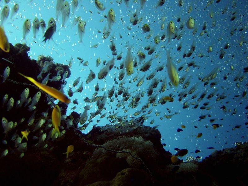 FishEyeEm Fish Fish World Underwater. Sea SeascapeThe Art Of Photography