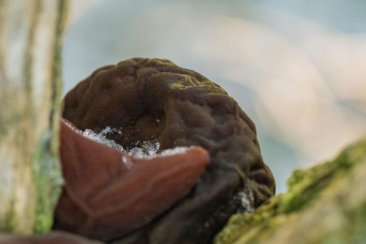 Close-up Selective Focus Freshness Still Life Focus On Foreground Indulgence Mushroom Mushrooms Brown