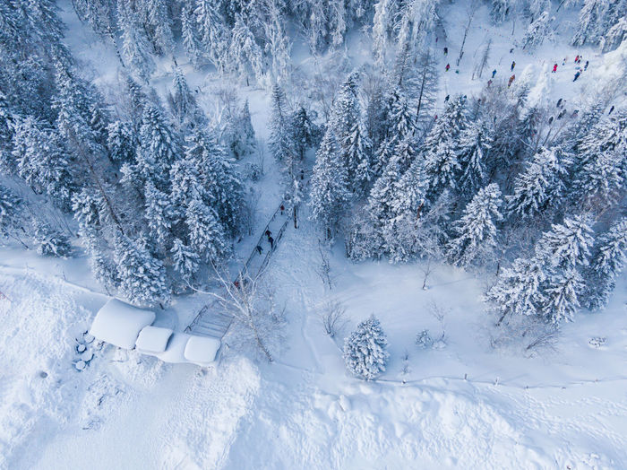 High angle view of snow covered trees on field