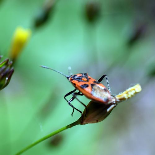 Selective Focus Insect Nature Insect_perfection Insect Paparazzi Insect Photography Insects Collection Insect Photo EyeEm Nature Lover Macro Insect Macro  Beauty In Nature Close-up