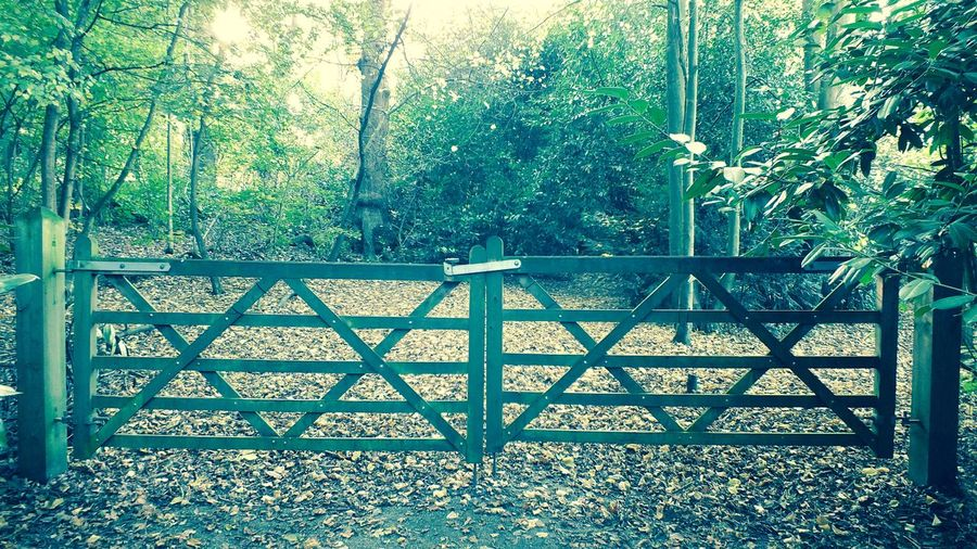 Wooden gate in park. Barrier Copy Space Division Gate Gates Gates And Fences Gateway Security Wood Gate Wooden Gate