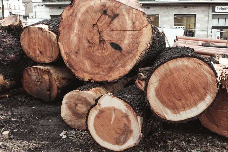 Architecture Wood Abundance Close-up Day Deforestation Environmental Issues Firewood Forest Fuel And Power Generation Heap Large Group Of Objects Log Lumber Industry Nature No People Outdoors Regeneration Secular Stack Stump Timber Tree Wood Wood - Material