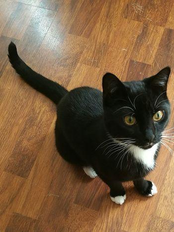 My Casper Cute Cute♡ Cuteeyes Cute Pets Cute Cats Blackandwhite Blackandwhitecat Bigeyes Bigcateyes