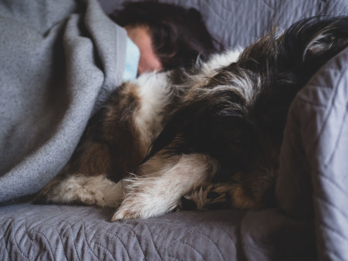 Close-up of woman and dog sleeping on sofa at home