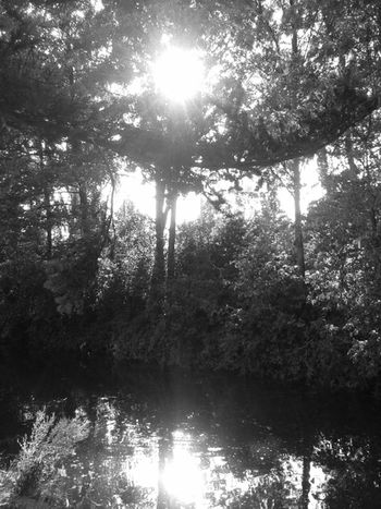 B&W Collection Relaxing Summer Nature_collection