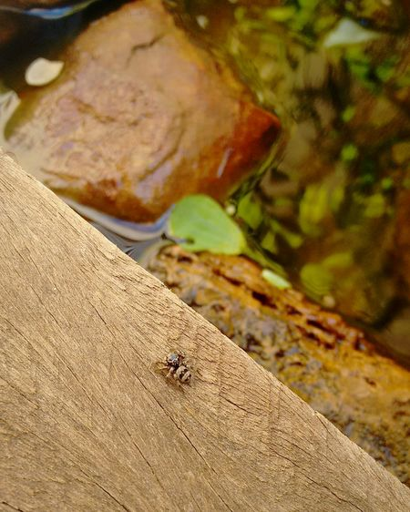 Nature Nature Photography Spider Bug Life Wood Stone Leaf