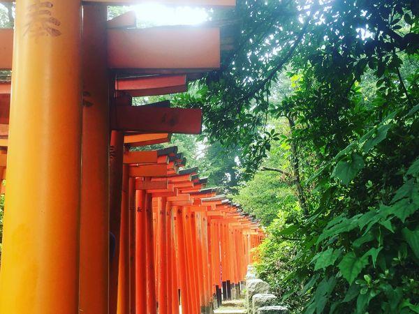千本鳥居 Inari Red Tree No People Contrast Green Nezu Shrine YANESEN Tokyo,Japan Japan Photography