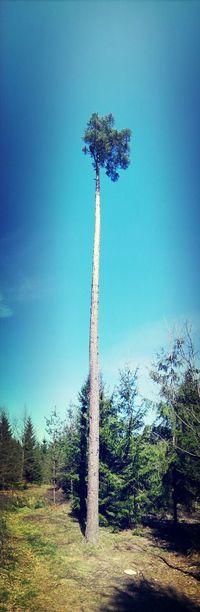 Russia Greentree Enjoying Life DEEP FOREST