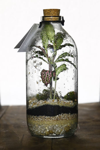 Transparent Glass - Material Container Indoors  No People Table Still Life Close-up Food And Drink Studio Shot Drink Bottle Refreshment Herb Focus On Foreground Food Nature Plant Wood - Material Leaf Mint Leaf - Culinary Glass