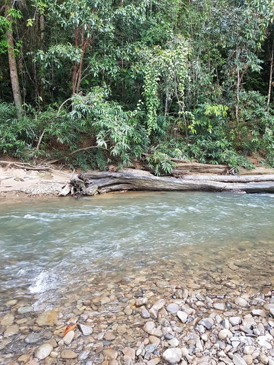 Cool, calm and collected Borneo Beauty In Nature Clear Waters Forest Growth Nature No People Outdoors Plant Rock - Object Tranquil Scene Tranquility Tree Water