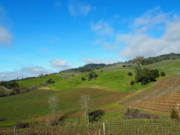 Napa Valley Beauty In Nature Clouds And Sky Hillside Landscape Rural Scene Sky Tranquil Scene Tranquility Vineyard