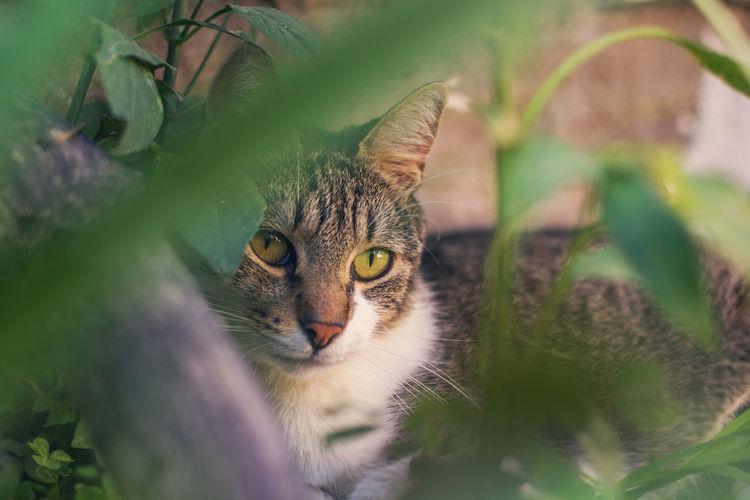 Close-up portrait of cat at park
