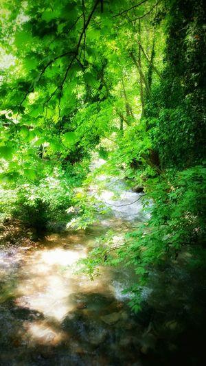 Enjoying Life Beauty Green Enjoying Nature EyeEm Nature Lover Forest River