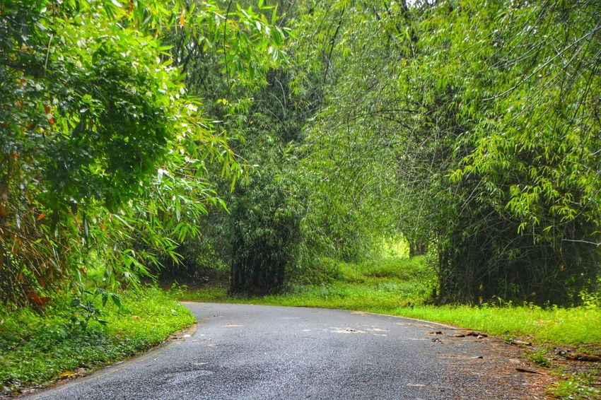 Green Color Tree The Way Forward Nature Growth Outdoors No People Road Day Grass Beauty In Nature Scenics Rainy Days D52000 Nature