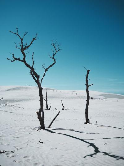 Dead tree on dune in sunshine