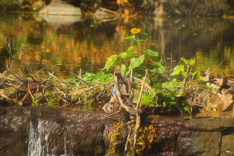 Beauty In Nature Water Reflections Autumn Colors Sunflower Flowingwater Paint Edit