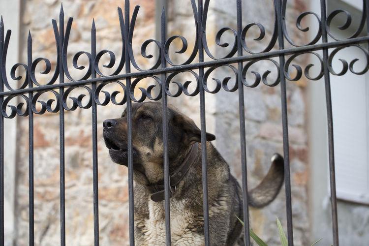 Close-up of dog seen through metal