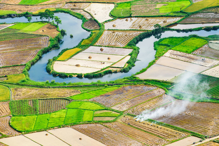 Agriculture Bacson Valley Rice Harvest Rice Terraces. Philippines Smoke Agriculture Bacson River Bacson Valley Field Fire Rice Flood Green Field Harvesting Harvesting Rice Nature Northern Vietnam Rice Harvesting Rice Terrace Rice Terrace Mucan Rice Terraces Rice Terraces Sapa River River And Field Smoke On The Field Vietnam Landscape