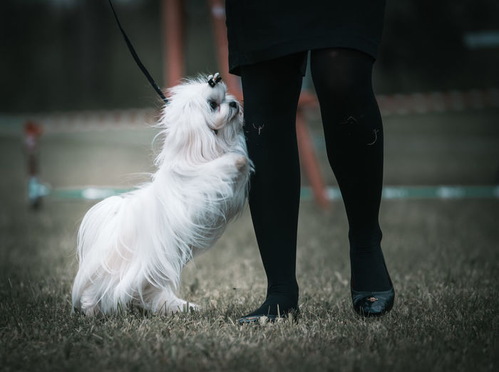 Low section of person with dog standing on field