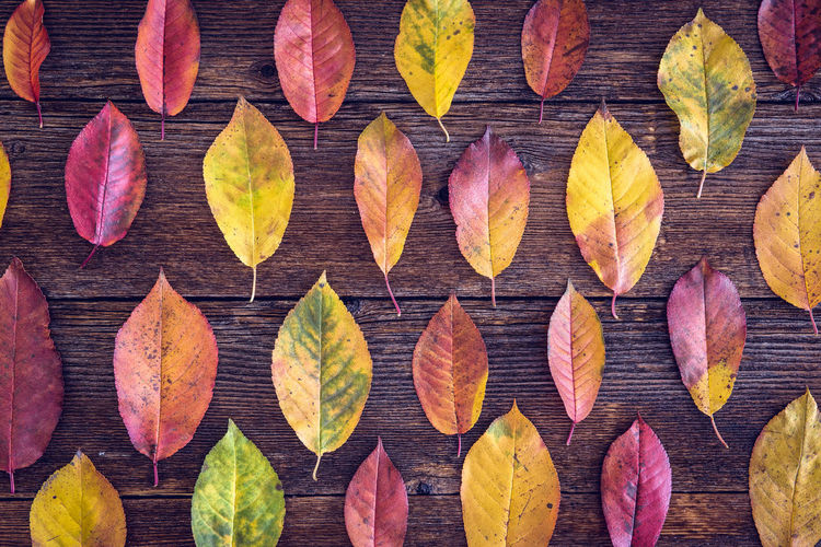 High Angle View Of Leaves Arranging On Wooden Table