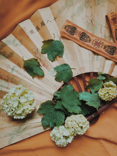 High angle view of person holding leaves on table