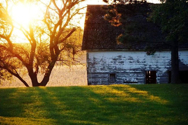 Beautiful barn in the sunset Tree Sunsets Barn Barnlife Rural Scene Beauty In Nature Sky First Eyeem Photo