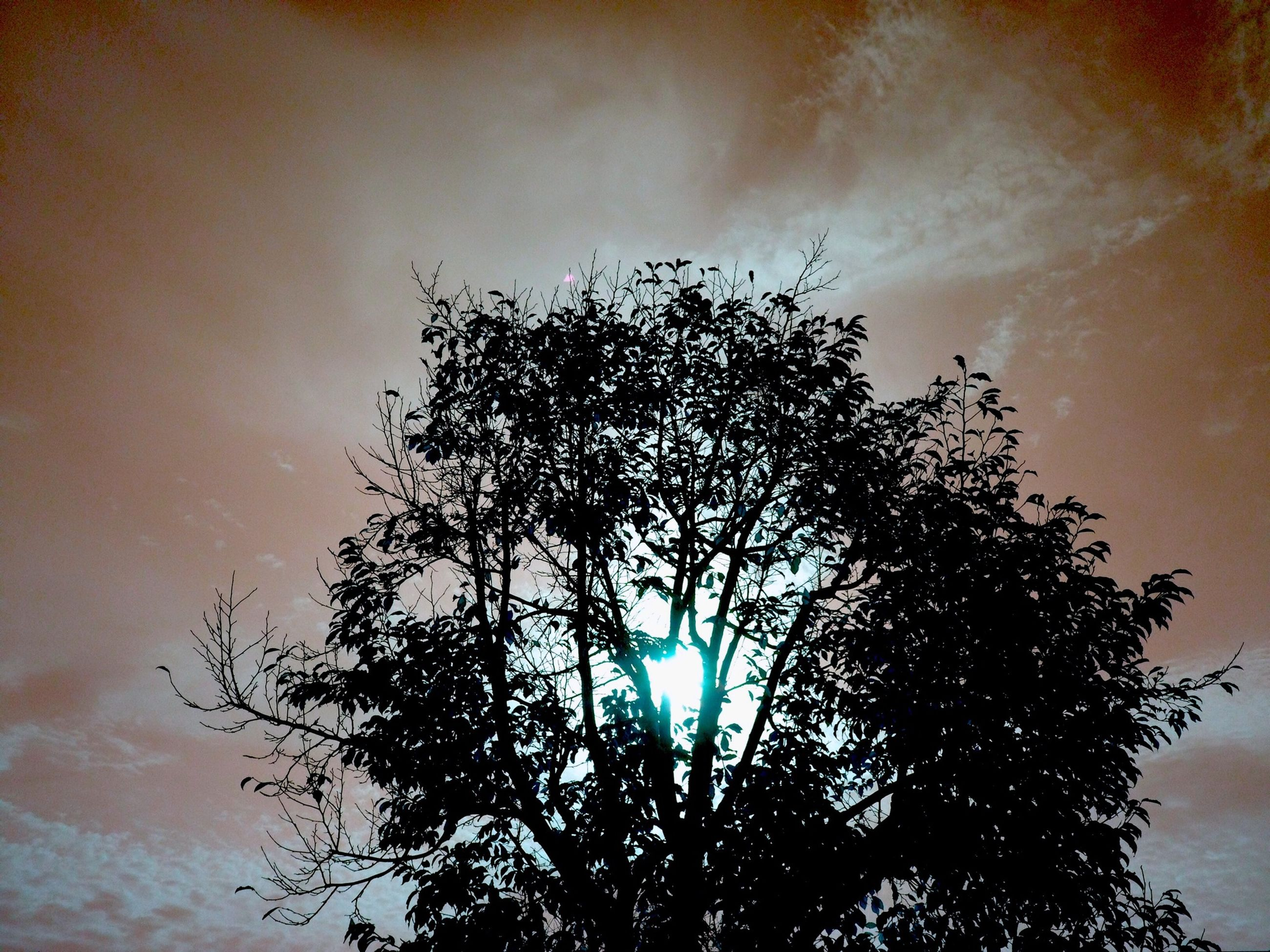 low angle view, tree, silhouette, sky, branch, growth, nature, tranquility, beauty in nature, sunset, sun, high section, scenics, treetop, outdoors, no people, tranquil scene, cloud - sky, sunlight, leaf