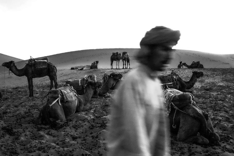Landscape Desert Morocco Sahara Desert Camels People And Places Non-urban Scene Outdoors Remote Monochrome Photography