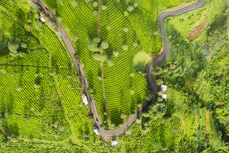 Plant Tree Green Color Aerial View Growth Day Nature Beauty In Nature Environment Landscape Scenics - Nature Forest No People Foliage Land Outdoors Lush Foliage Tranquility High Angle View Rural Scene Tropical Rainforest Rainforest