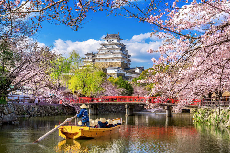 Cherry blossoms and castle in Himeji, Japan. Tree Water Plant Transportation Nature Architecture Mode Of Transportation Built Structure Nautical Vessel Day River Travel Real People Growth Sky Men Lifestyles Travel Destinations Outdoors Cherry Blossom Springtime