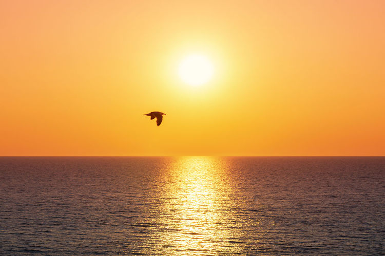 Sonnenuntergang Sunset Silhouettes Sylt, Germany Water Reflections Bird Flying Horizon Over Water No People North Sea Ocean One Animal Orange Color Outdoors Scenics - Nature Sea Seagull Sky Sun Sunlight Sunset Sylt Water