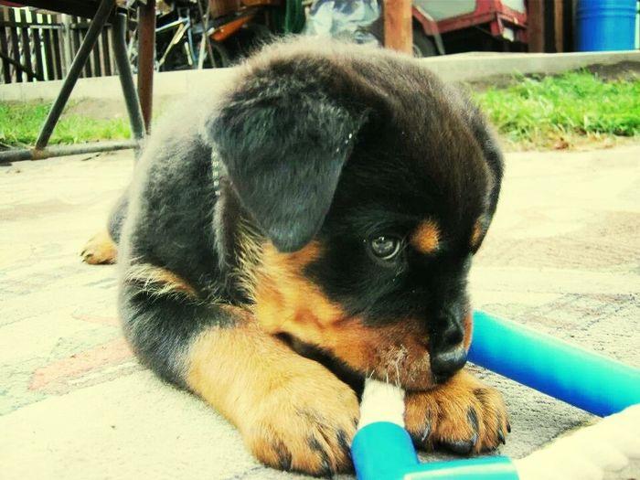 Beruškaaa :-**** Dog