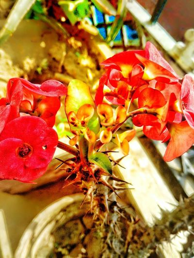 love it Flower Flower Head Red Butterfly - Insect Insect Close-up Animal Themes Leaf Vein Red Color Leaves Natural Pattern
