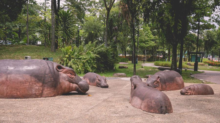 Hippo sculptures! Public Playground Hippo Hippopotamus Imagination Animal Animal Themes Day Group Of Animals No People Play Area Sculptures Sunlight Tree