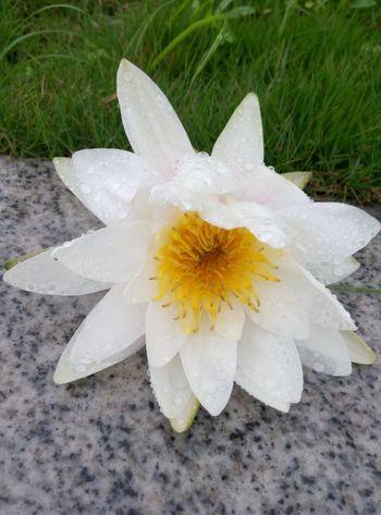 After The Rain Flower Lovely Fresh