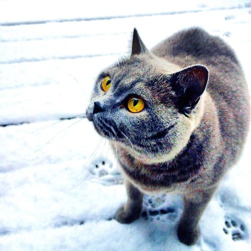 Snow ❄ Firstsnow SundayFunday Taking Photos Enjoying Life Taking Pictures Taking Photos Mycat♥ Special Day Relaxing Animals I Love My Cat ❤ Home Sweet Home My Cat Hello World Eye4photography  EyeEm Best Shots Goodmorning ♥ Good Morning Goodday Funny